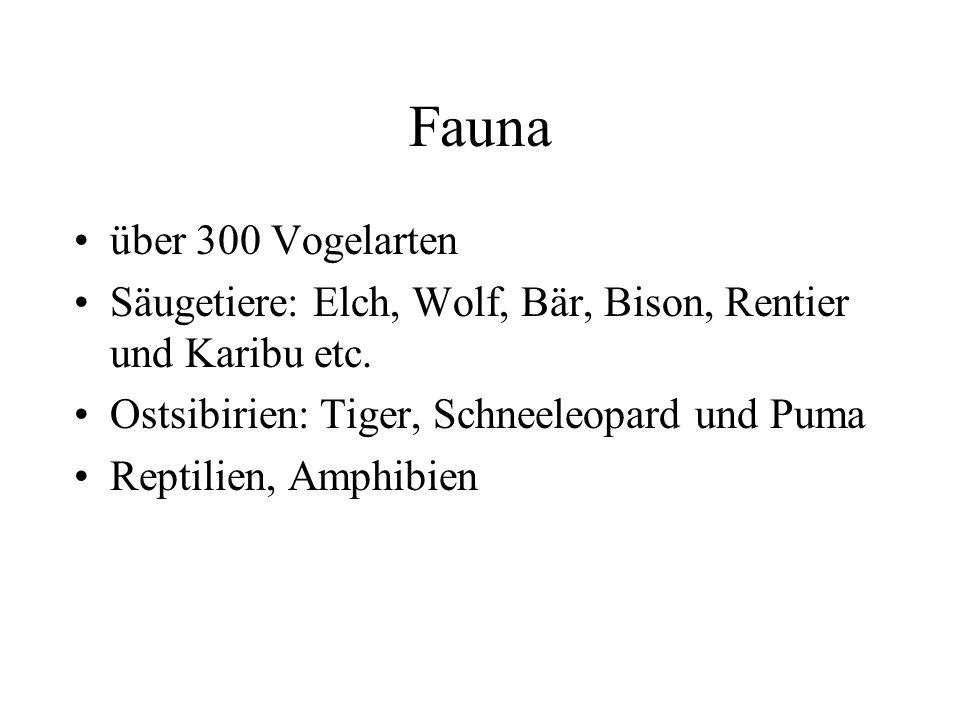 Fauna über 300 Vogelarten Säugetiere: Elch, Wolf, Bär, Bison, Rentier und Karibu etc. Ostsibirien: Tiger, Schneeleopard und Puma Reptilien, Amphibien