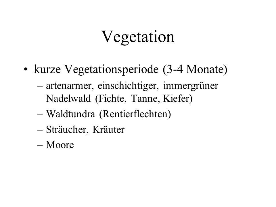 Vegetation kurze Vegetationsperiode (3-4 Monate) –artenarmer, einschichtiger, immergrüner Nadelwald (Fichte, Tanne, Kiefer) –Waldtundra (Rentierflecht
