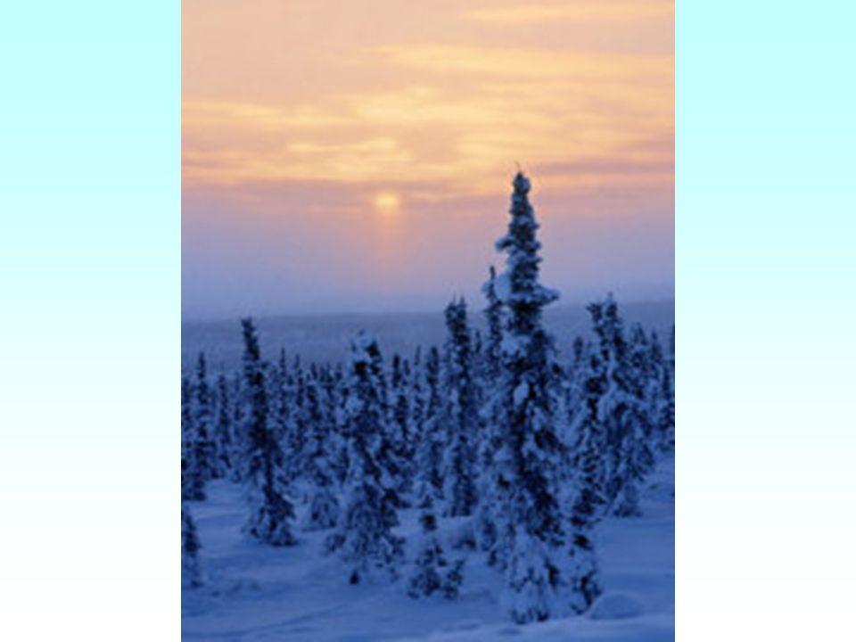 Transportwege von 1974-1977 Errichtung der Trans-Alaska-Pipeline von Prudhoe Bay nach Valdez Zentral- und Südalaska erdbebengefährdet, Träger, auf der die Pipeline 3,6m horizontal und 0,6m vertikal ausscheren kann Streckenverlauf nicht geradlinig sondern im Zickzack Vermeidung von Stauchungen und Dehnungen der Längsachse von Valdez aus wird das Öl verschifft (eisfreier Hafen im Süden Alaskas)