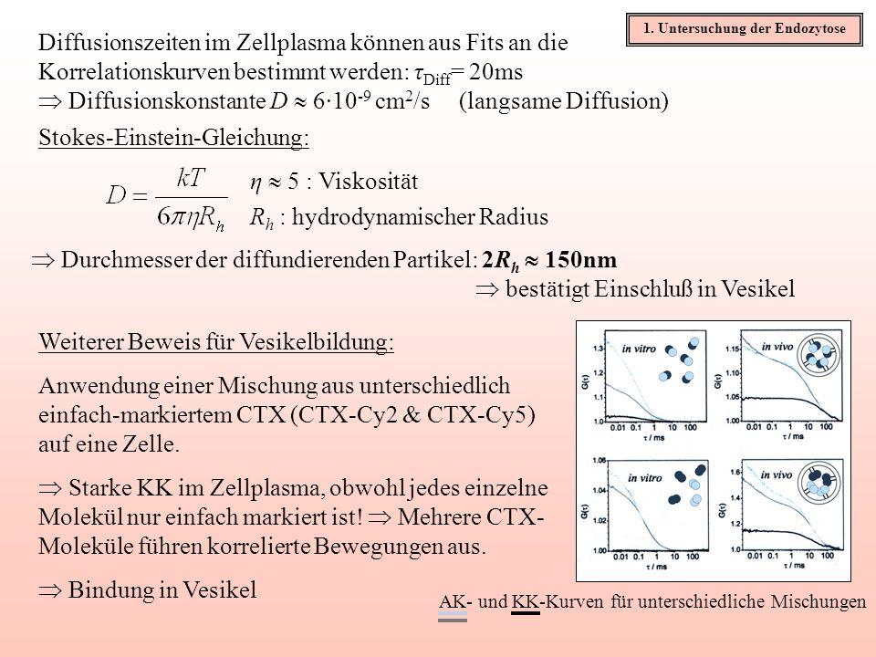 Diffusionszeiten im Zellplasma können aus Fits an die Korrelationskurven bestimmt werden: τ Diff = 20ms Diffusionskonstante D 6·10 -9 cm 2 /s (langsam