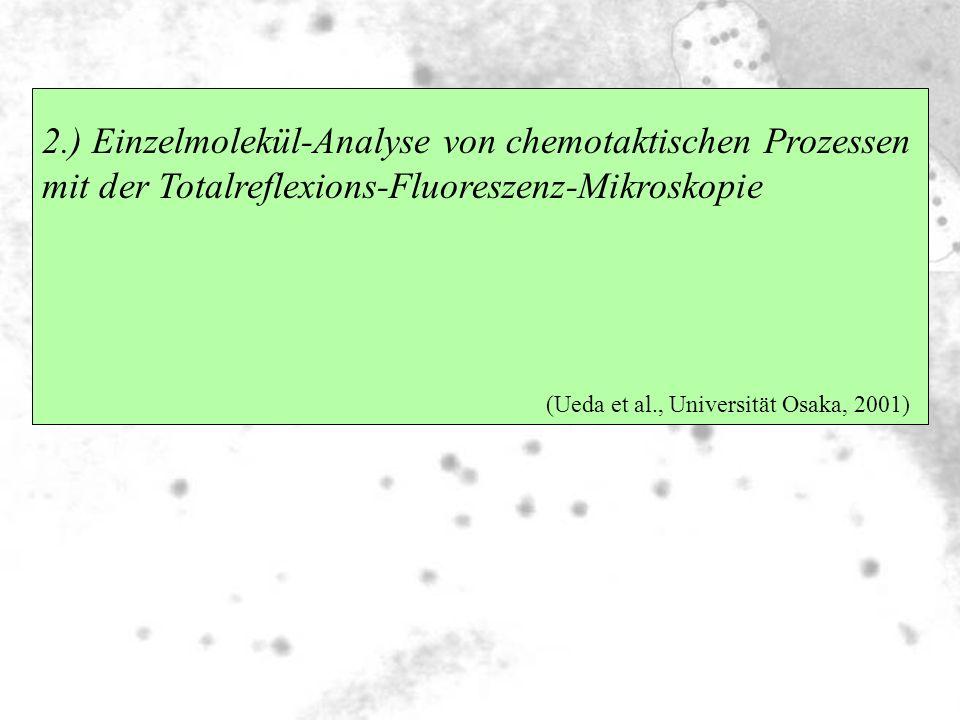 2.) Einzelmolekül-Analyse von chemotaktischen Prozessen mit der Totalreflexions-Fluoreszenz-Mikroskopie (Ueda et al., Universität Osaka, 2001)