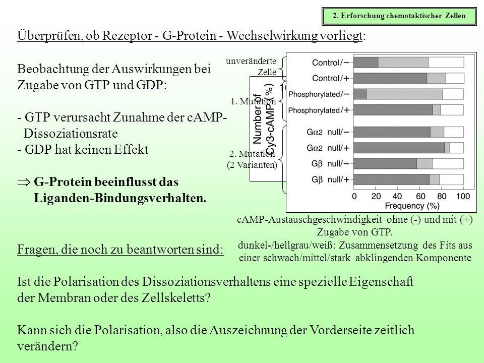 Beobachtung der Auswirkungen bei Zugabe von GTP und GDP: - GTP verursacht Zunahme der cAMP- Dissoziationsrate - GDP hat keinen Effekt G-Protein beeinf