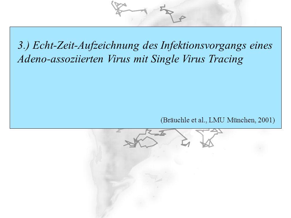 3.) Echt-Zeit-Aufzeichnung des Infektionsvorgangs eines Adeno-assoziierten Virus mit Single Virus Tracing (Bräuchle et al., LMU München, 2001)