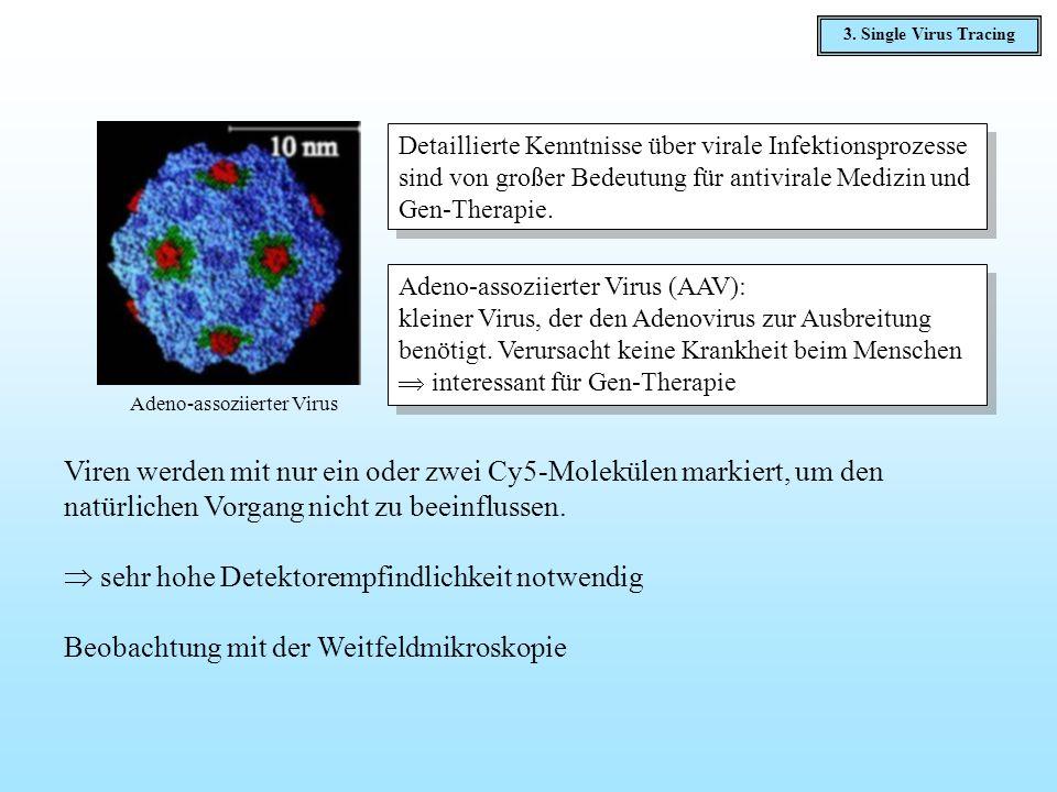 Viren werden mit nur ein oder zwei Cy5-Molekülen markiert, um den natürlichen Vorgang nicht zu beeinflussen. sehr hohe Detektorempfindlichkeit notwend