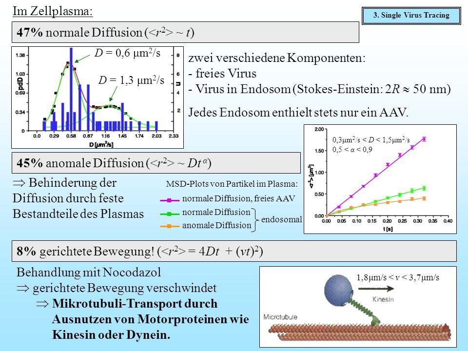 Im Zellplasma: 47% normale Diffusion ( ~ t) D = 0,6 μm 2 /s D = 1,3 μm 2 /s zwei verschiedene Komponenten: - freies Virus - Virus in Endosom (Stokes-E