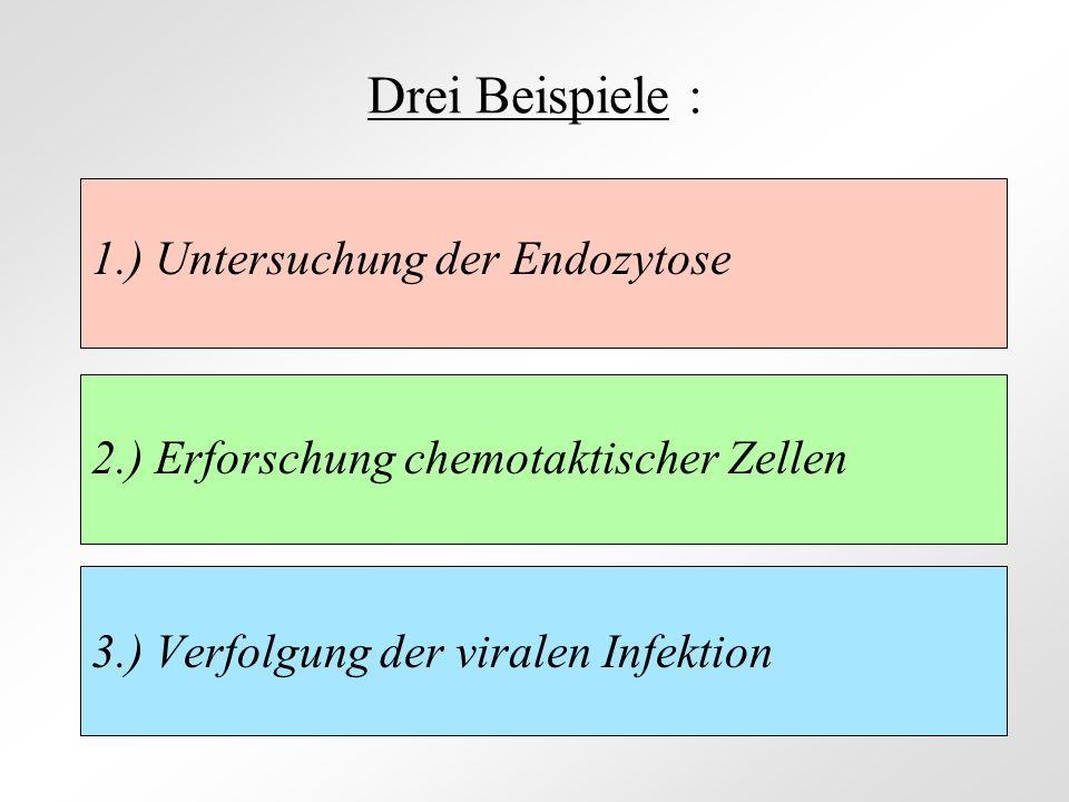 Drei Beispiele : 1.) Untersuchung der Endozytose 2.) Erforschung chemotaktischer Zellen 3.) Verfolgung der viralen Infektion
