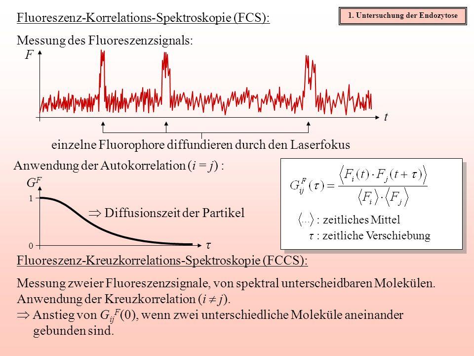 Experimenteller Aufbau für die FCCS: Zellprobe Objektiv Laseranregung 488nm & 631nm (einige μW) Fokus Hauptstrahlteiler Sekundärstrahlteiler Detektor 1 Detektor 2 lateraler 1/e²-Radius des Beobachtungsvolumens: ~0,18μm für grün, 0,25μm für rot FrFr FgFg 1.