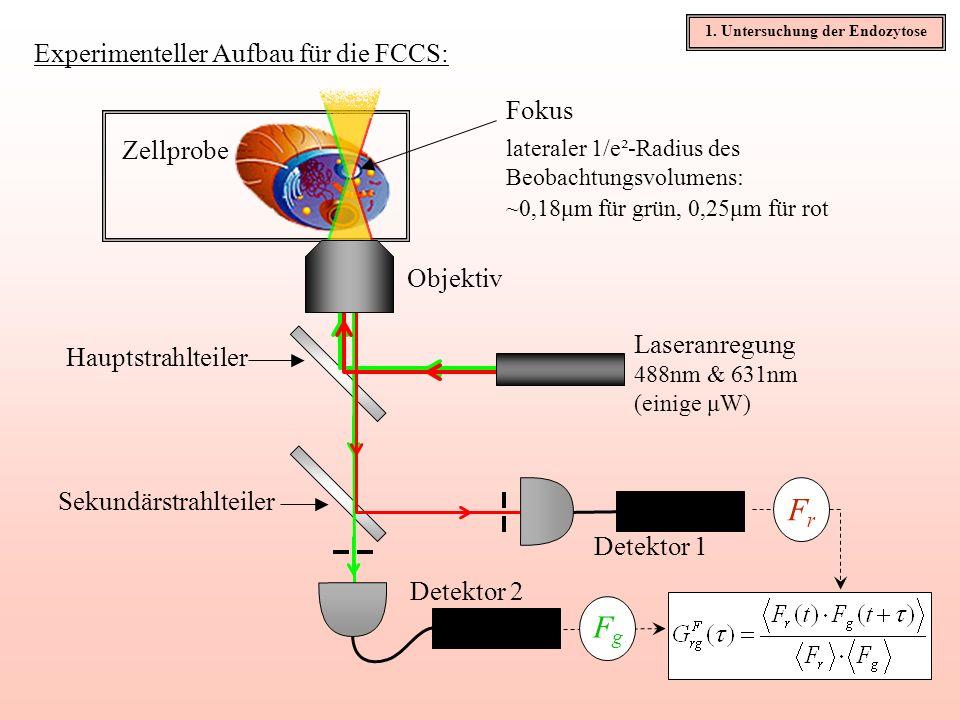 Experimenteller Aufbau für die FCCS: Zellprobe Objektiv Laseranregung 488nm & 631nm (einige μW) Fokus Hauptstrahlteiler Sekundärstrahlteiler Detektor