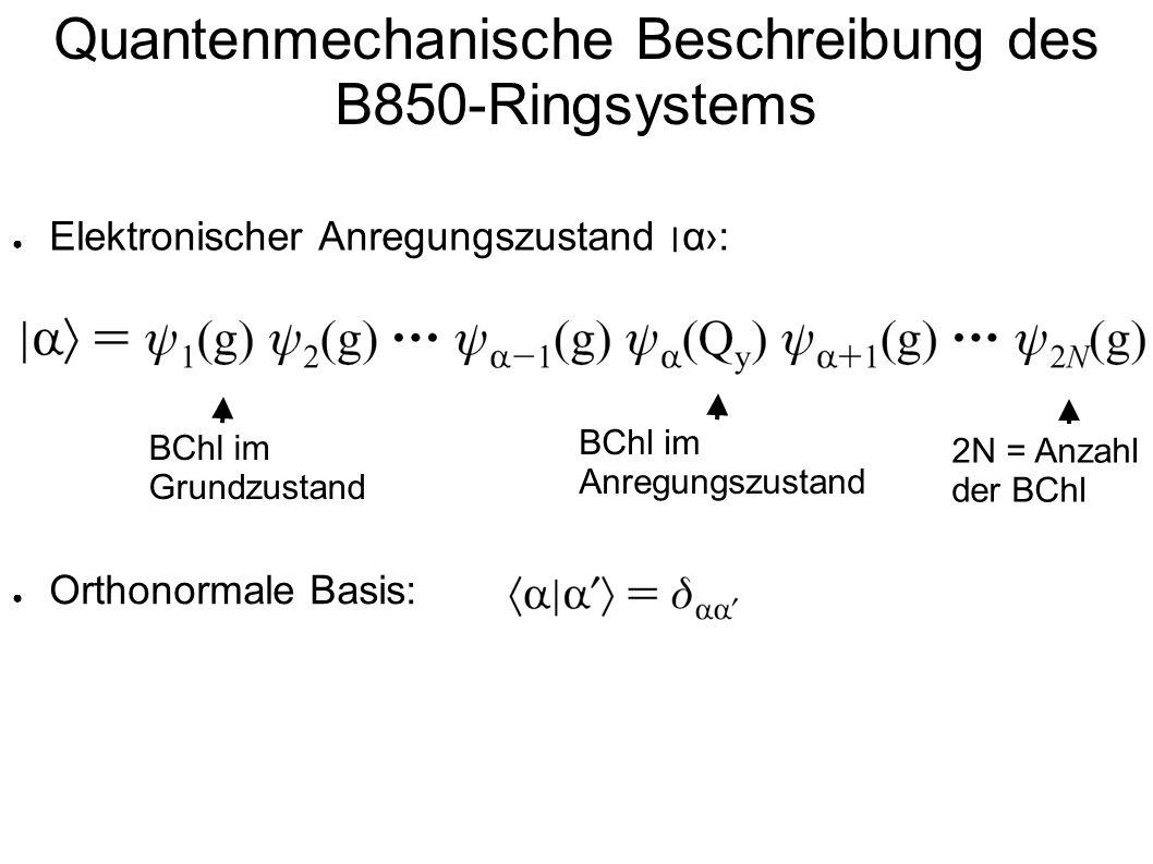 Quantenmechanische Beschreibung des B850-Ringsystems Elektronischer Anregungszustand ׀ α: Orthonormale Basis: BChl im Grundzustand BChl im Anregungszu