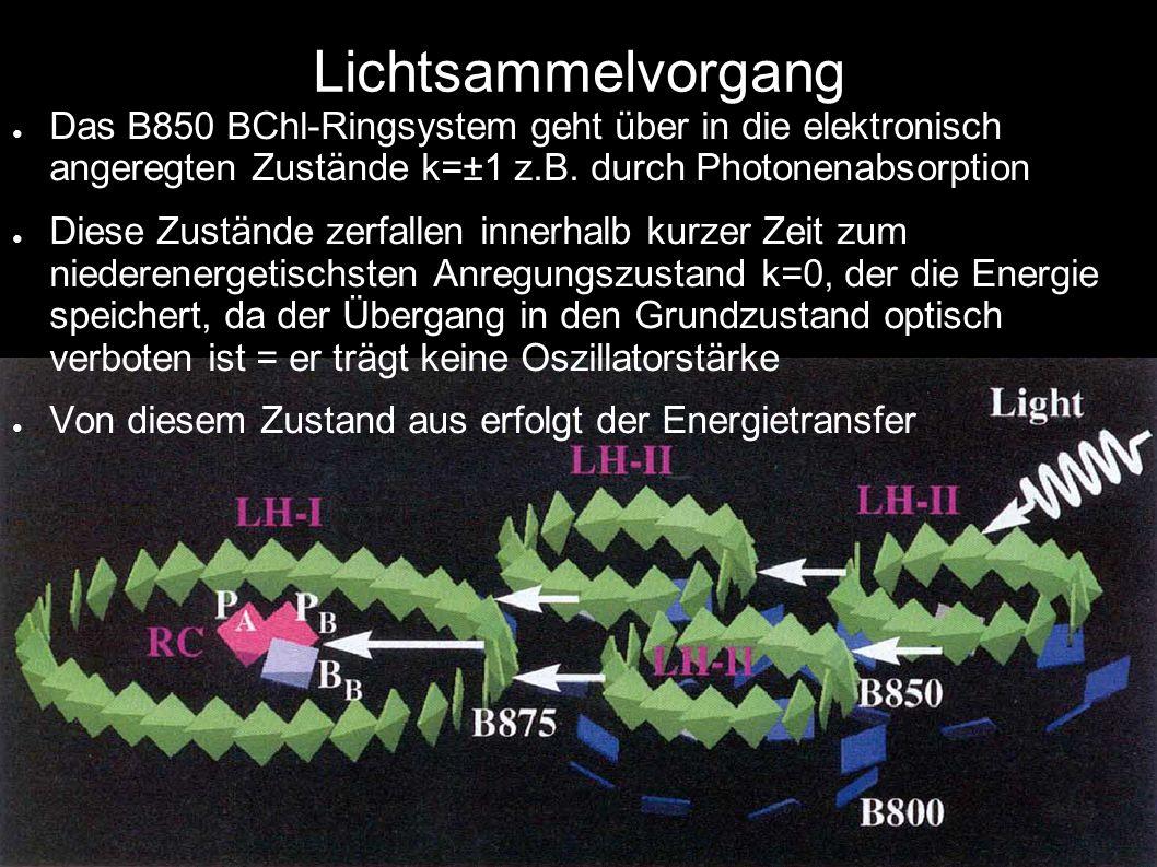 Lichtsammelvorgang Das B850 BChl-Ringsystem geht über in die elektronisch angeregten Zustände k=±1 z.B. durch Photonenabsorption Diese Zustände zerfal