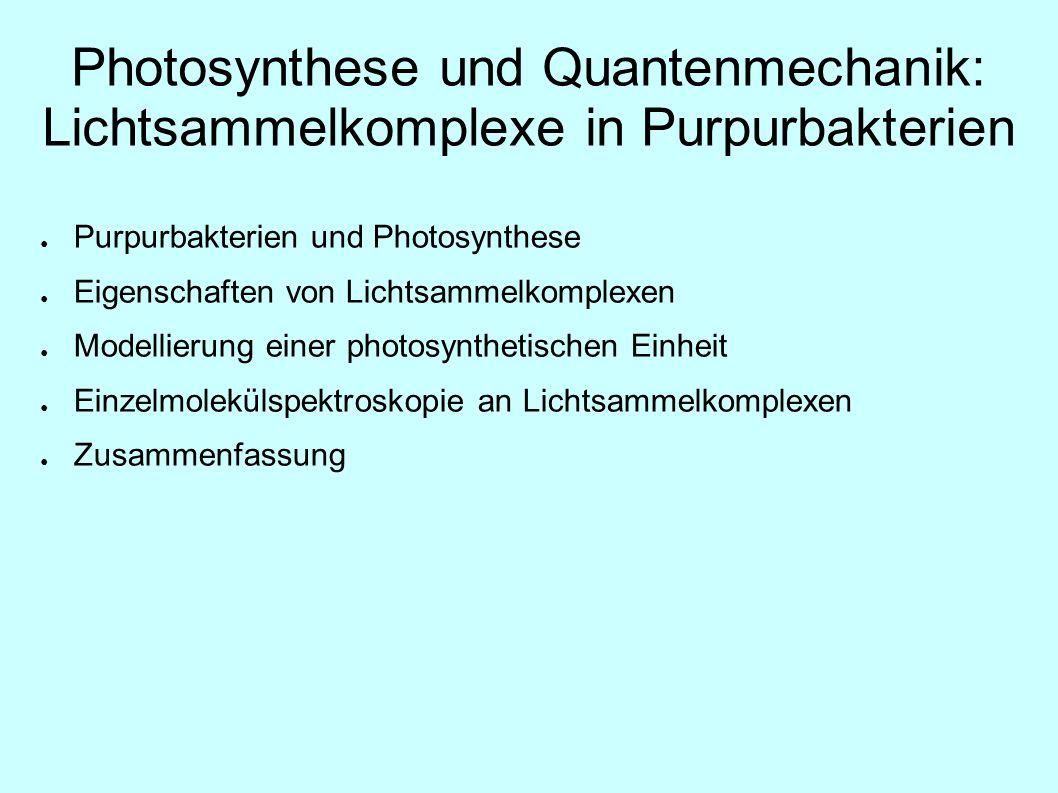 Photosynthese und Quantenmechanik: Lichtsammelkomplexe in Purpurbakterien Purpurbakterien und Photosynthese Eigenschaften von Lichtsammelkomplexen Mod