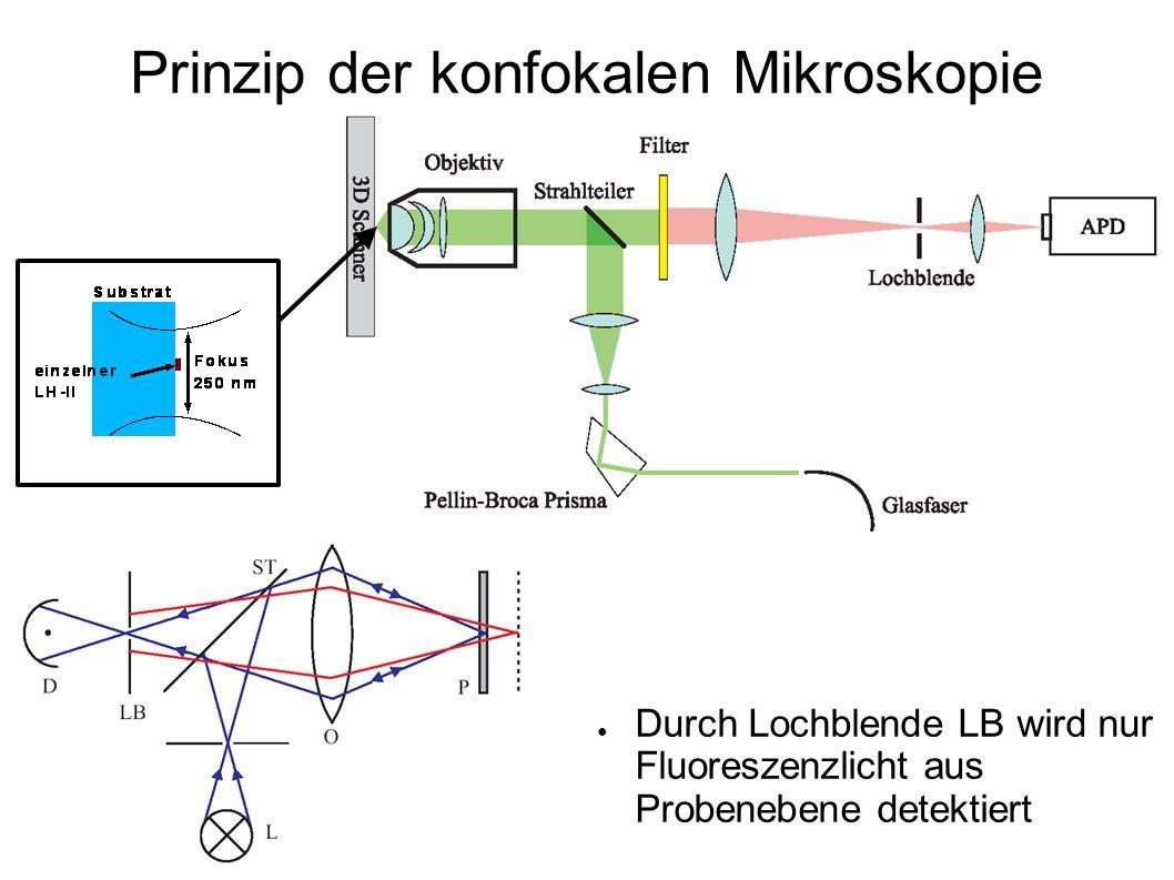Durch Lochblende LB wird nur Fluoreszenzlicht aus Probenebene detektiert Prinzip der konfokalen Mikroskopie