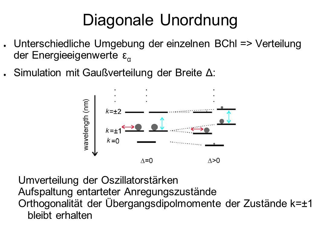 Diagonale Unordnung Unterschiedliche Umgebung der einzelnen BChl => Verteilung der Energieeigenwerte ε α Simulation mit Gaußverteilung der Breite Δ: U