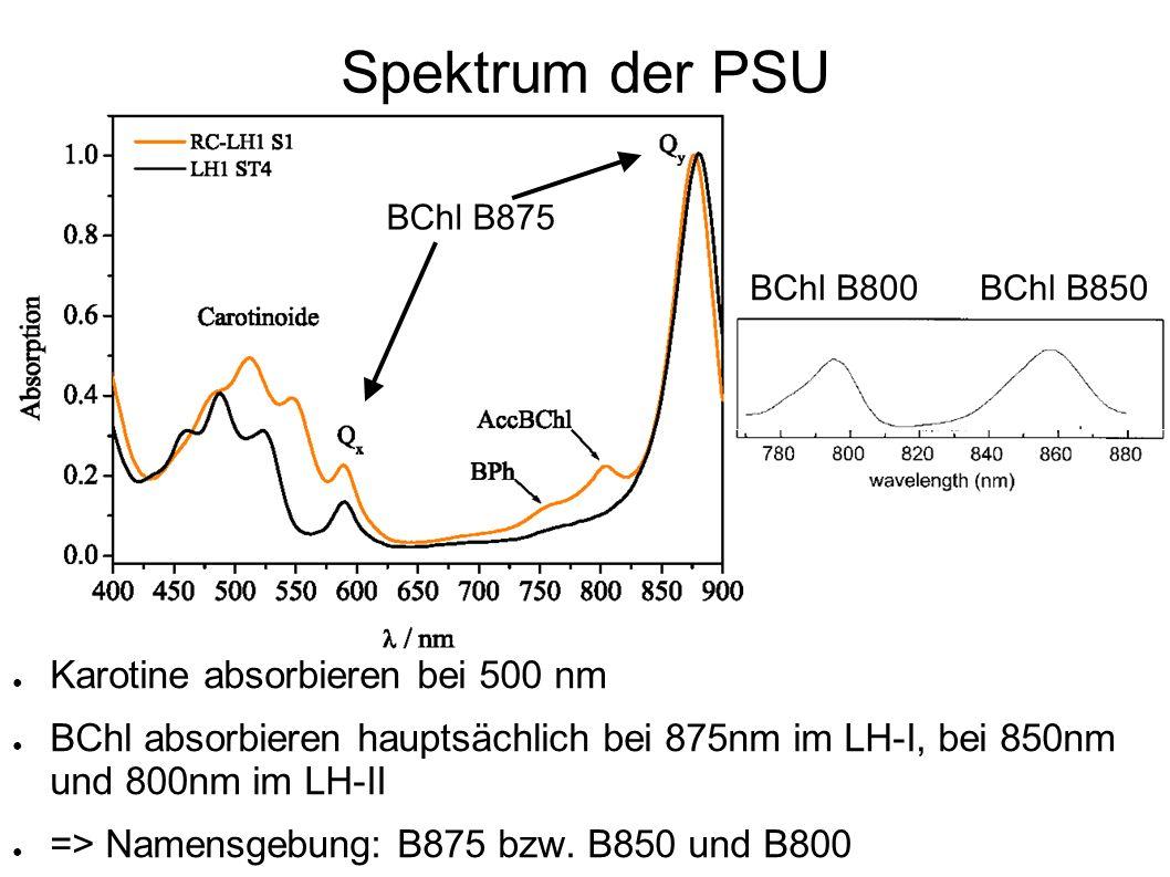 Spektrum der PSU Karotine absorbieren bei 500 nm BChl absorbieren hauptsächlich bei 875nm im LH-I, bei 850nm und 800nm im LH-II => Namensgebung: B875