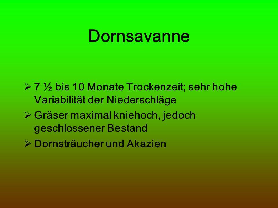 Dornsavanne 7 ½ bis 10 Monate Trockenzeit; sehr hohe Variabilität der Niederschläge Gräser maximal kniehoch, jedoch geschlossener Bestand Dornsträuche