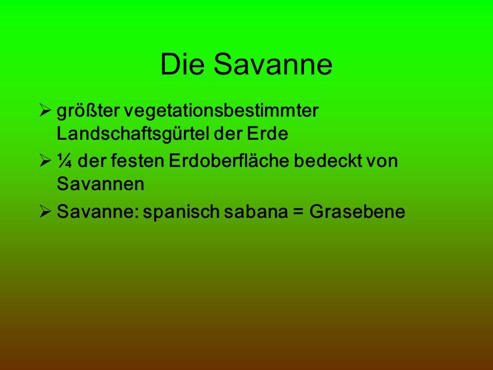 Die Savanne größter vegetationsbestimmter Landschaftsgürtel der Erde ¼ der festen Erdoberfläche bedeckt von Savannen Savanne: spanisch sabana = Graseb
