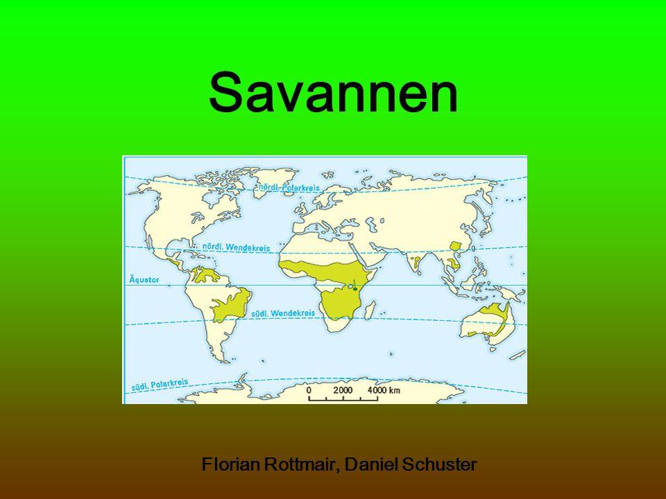 Die Savanne größter vegetationsbestimmter Landschaftsgürtel der Erde ¼ der festen Erdoberfläche bedeckt von Savannen Savanne: spanisch sabana = Grasebene