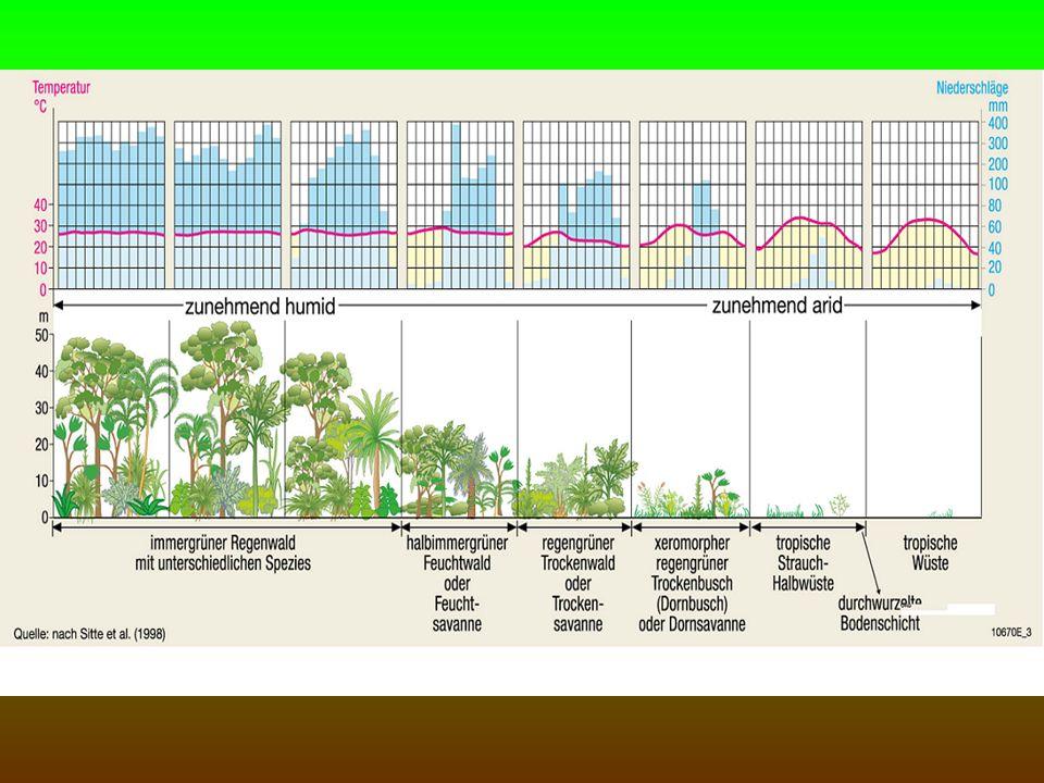 Savanneböden intensive chemische Verwitterung Auslaugung zur Regenzeit arm an Nährstoffen (außer bei vulkanischem Böden oder Schwemmland) Auslaugung nimmt vom Äquator zu den Wendekreisen ab (geringere Nds.)