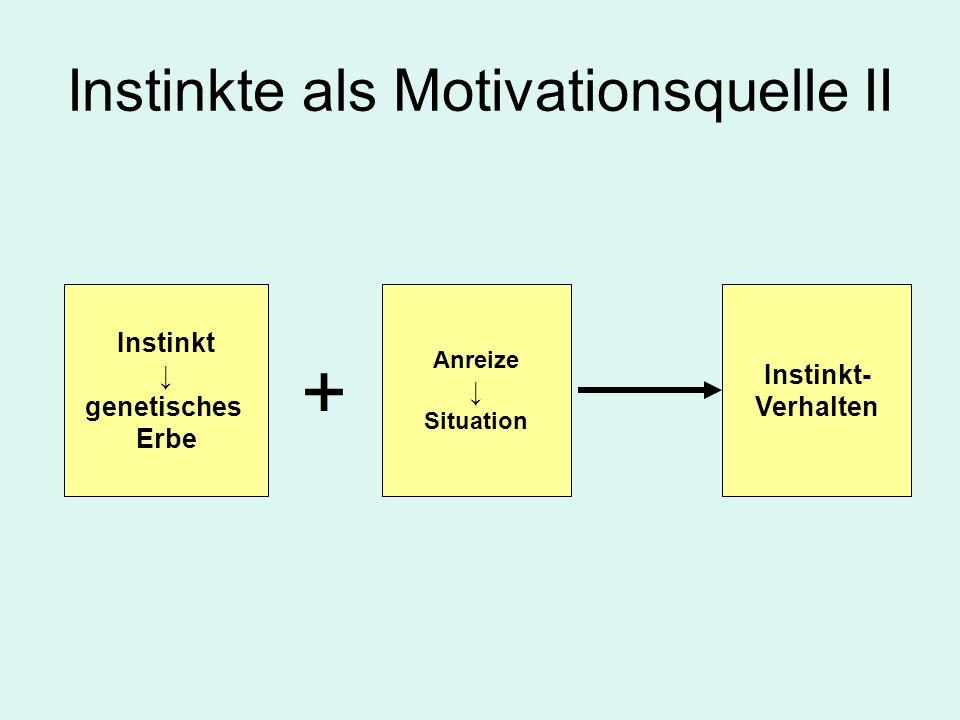 Instinkte als Motivationsquelle II Instinkt genetisches Erbe Anreize Situation Instinkt- Verhalten +