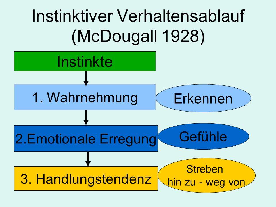 Instinktiver Verhaltensablauf (McDougall 1928) Instinkte 1. Wahrnehmung 2.Emotionale Erregung 3. Handlungstendenz Erkennen Gefühle Streben hin zu - we