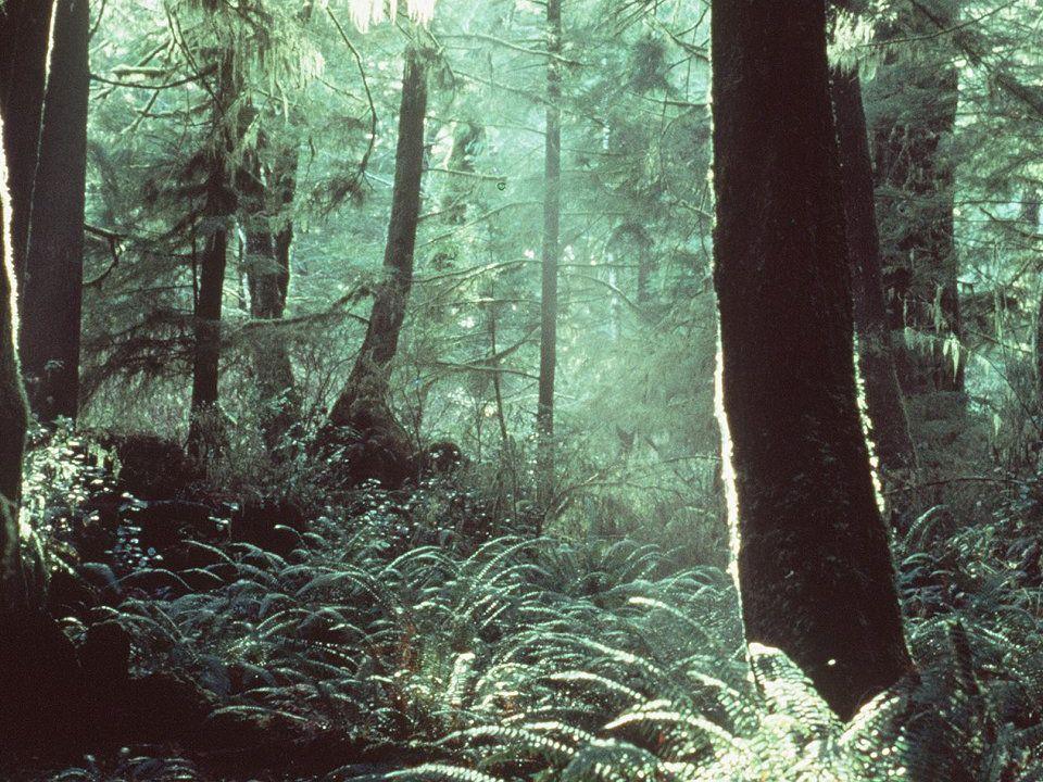 2. Ökologische Psychologie 2.2. Entwicklung und Ansätze Seit 60er / 70er Jahren als multidisziplinärer Wissenschaftszweig Psychologie, Sozialwissensch
