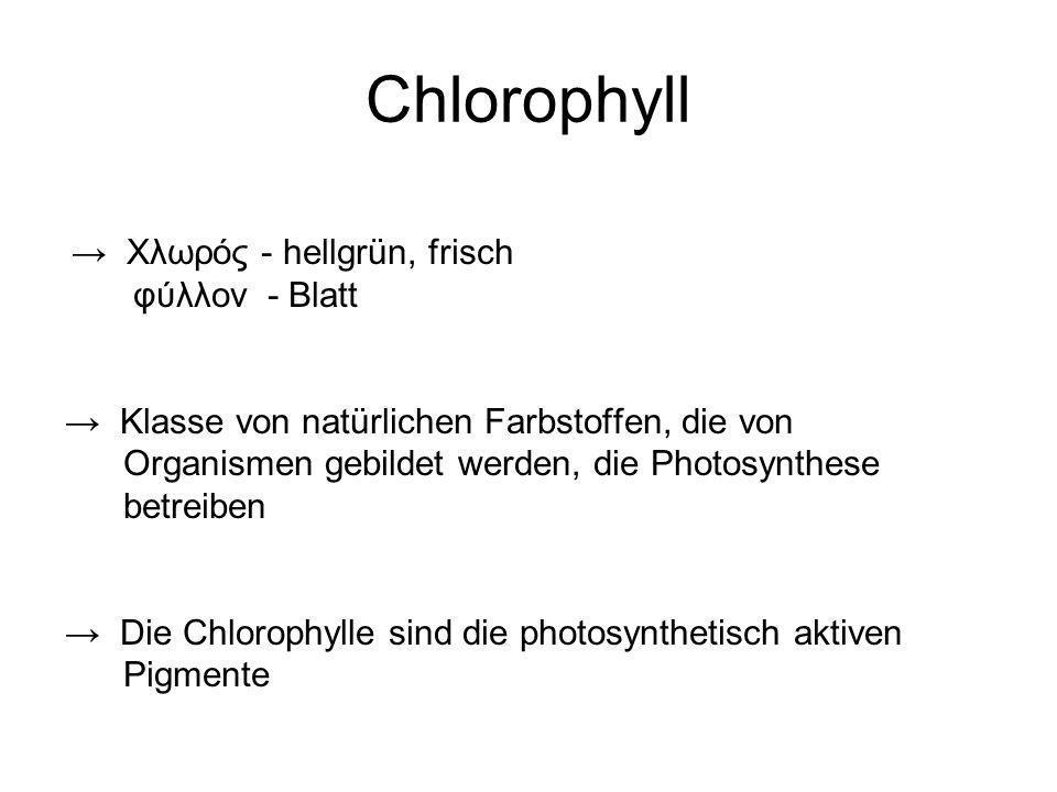 Chlorophyll Χλωρός - hellgrün, frisch φύλλον - Blatt Klasse von natürlichen Farbstoffen, die von Organismen gebildet werden, die Photosynthese betreib