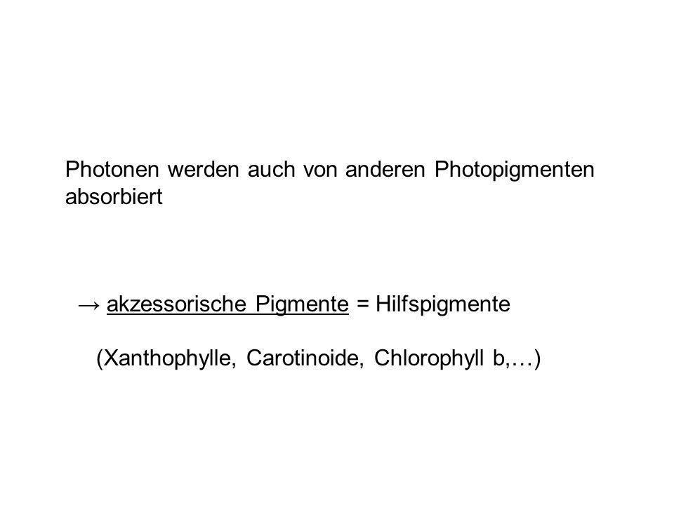 Photonen werden auch von anderen Photopigmenten absorbiert akzessorische Pigmente = Hilfspigmente (Xanthophylle, Carotinoide, Chlorophyll b,…)