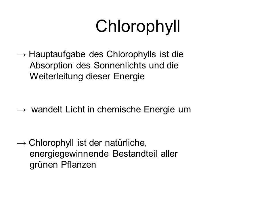 Chlorophyll Hauptaufgabe des Chlorophylls ist die Absorption des Sonnenlichts und die Weiterleitung dieser Energie wandelt Licht in chemische Energie