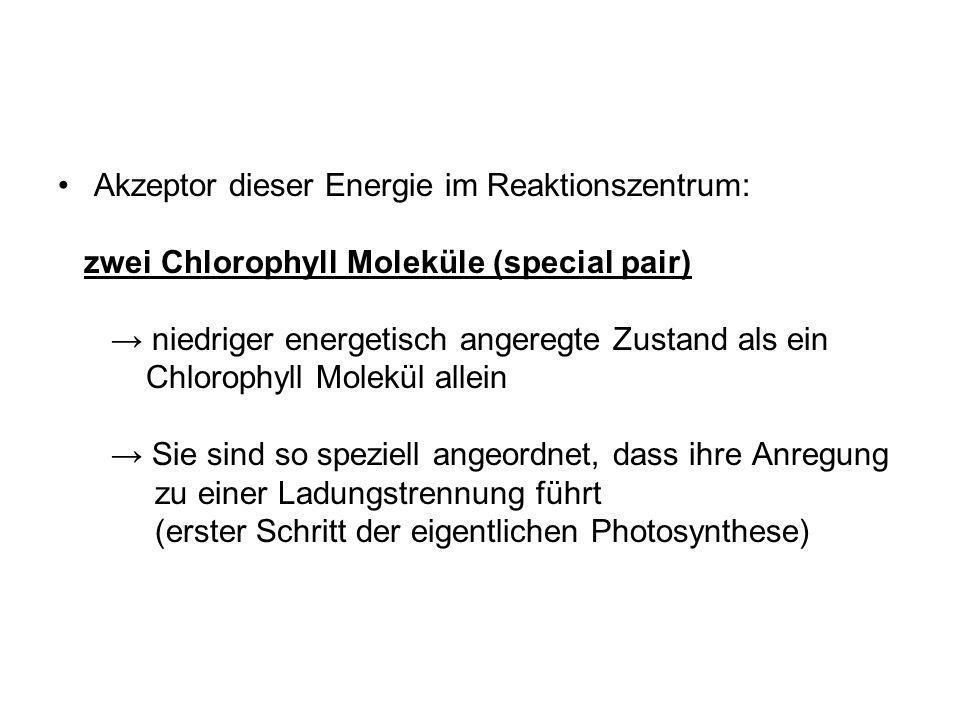 Akzeptor dieser Energie im Reaktionszentrum: zwei Chlorophyll Moleküle (special pair) niedriger energetisch angeregte Zustand als ein Chlorophyll Mole