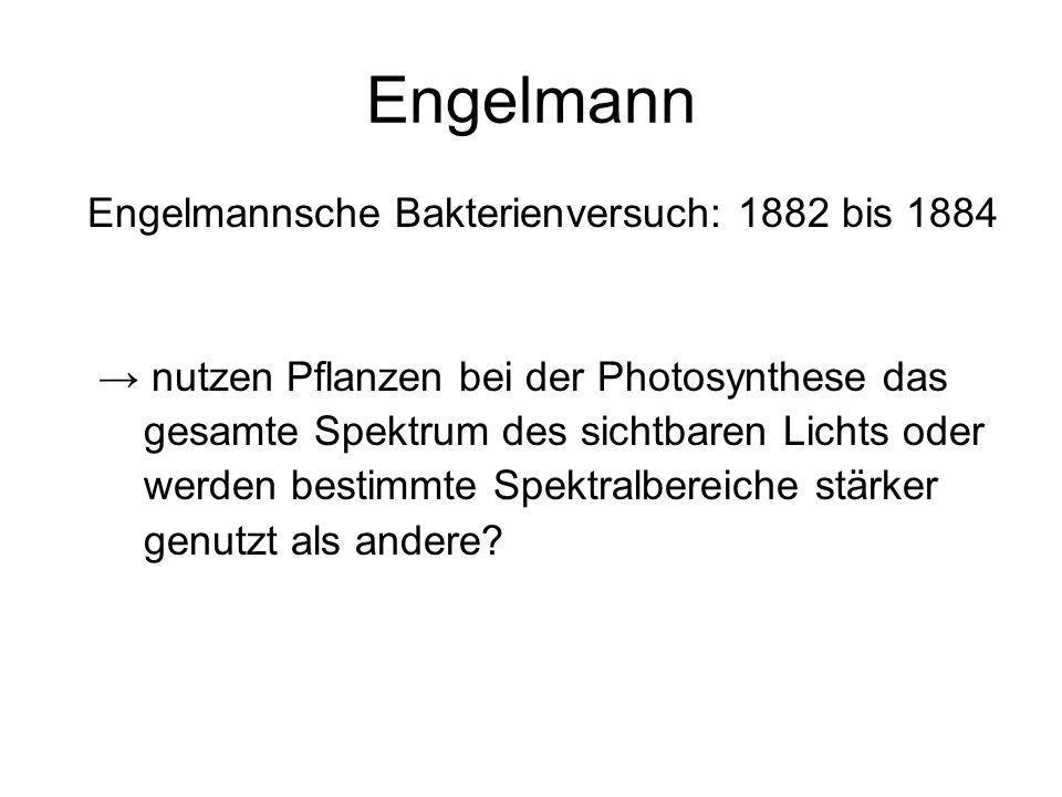 Engelmann Engelmannsche Bakterienversuch: 1882 bis 1884 nutzen Pflanzen bei der Photosynthese das gesamte Spektrum des sichtbaren Lichts oder werden b