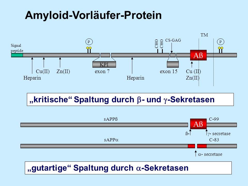 Signal peptide Cu(II) Zn(II) exon 7 exon 15 Cu (II) Heparin Heparin Zn(II) p p KPI CS-GAG CHO Aß sAPPß C-99 sAPP C-83 ß- - secretase - secretase TM Am