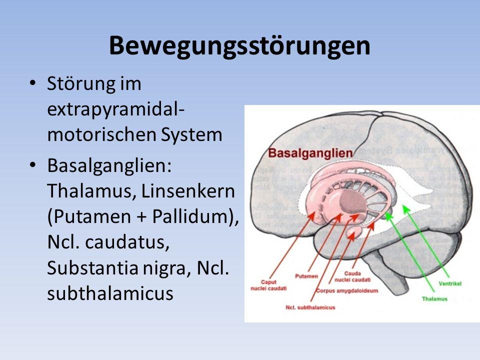 Bewegungsstörungen Störung im extrapyramidal- motorischen System Basalganglien: Thalamus, Linsenkern (Putamen + Pallidum), Ncl. caudatus, Substantia n
