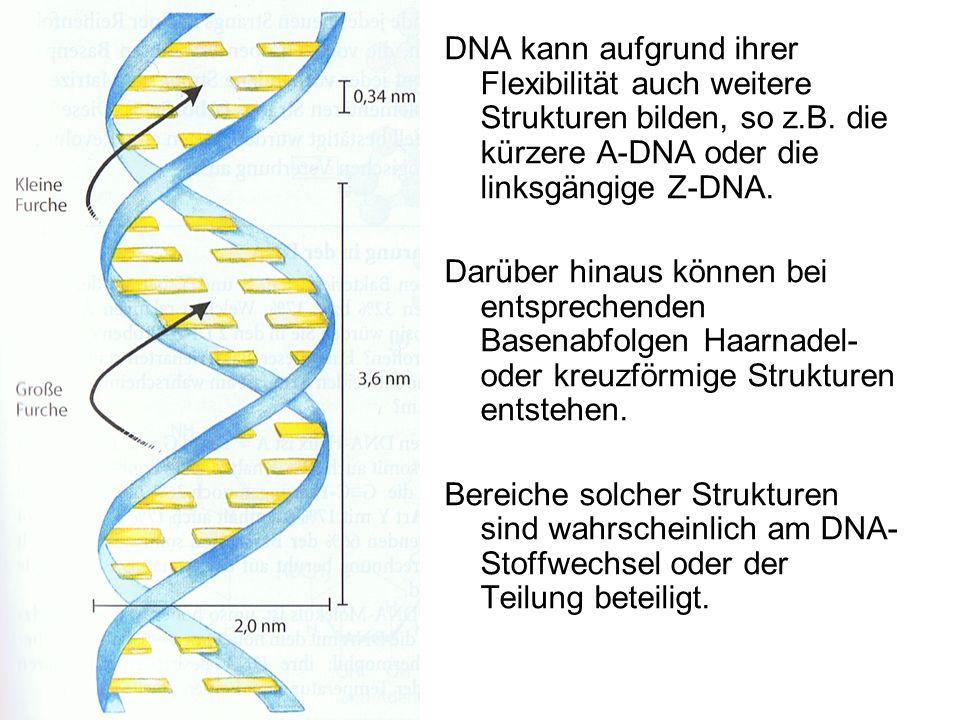 DNA kann aufgrund ihrer Flexibilität auch weitere Strukturen bilden, so z.B. die kürzere A-DNA oder die linksgängige Z-DNA. Darüber hinaus können bei