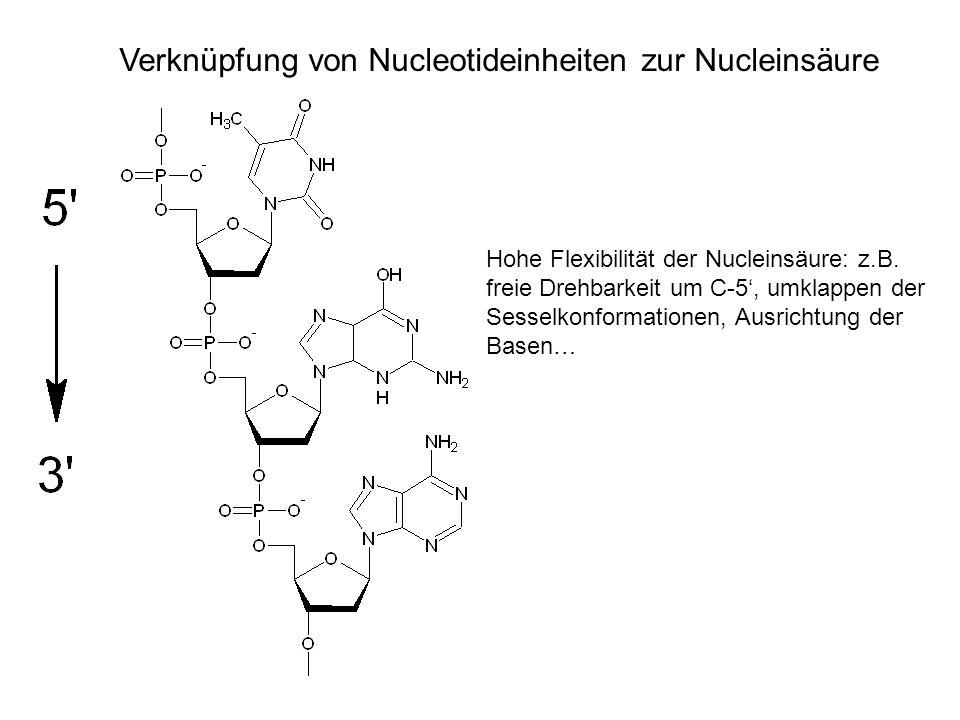 Verknüpfung von Nucleotideinheiten zur Nucleinsäure Hohe Flexibilität der Nucleinsäure: z.B. freie Drehbarkeit um C-5, umklappen der Sesselkonformatio