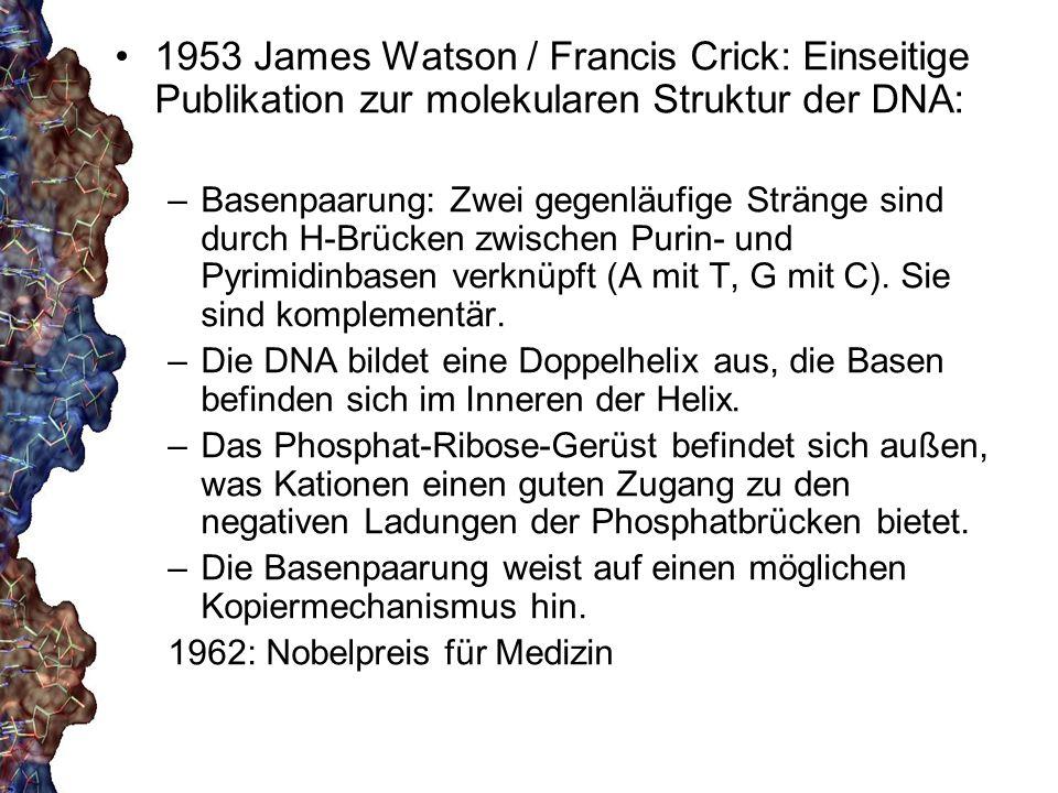 1953 James Watson / Francis Crick: Einseitige Publikation zur molekularen Struktur der DNA: –Basenpaarung: Zwei gegenläufige Stränge sind durch H-Brüc