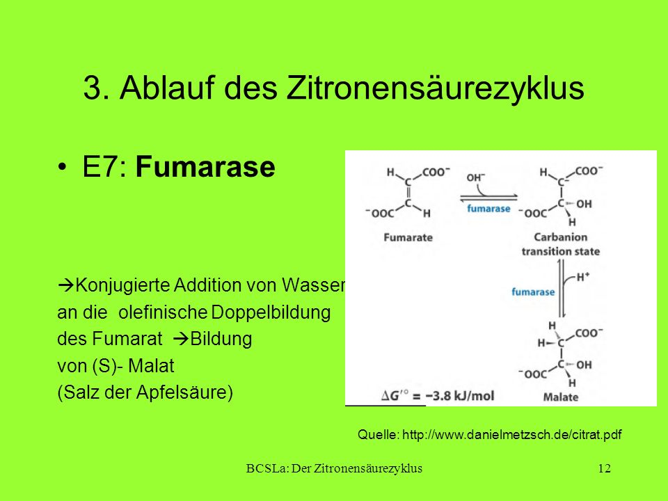 BCSLa: Der Zitronensäurezyklus12 3. Ablauf des Zitronensäurezyklus E7: Fumarase Konjugierte Addition von Wasser an die olefinische Doppelbildung des F
