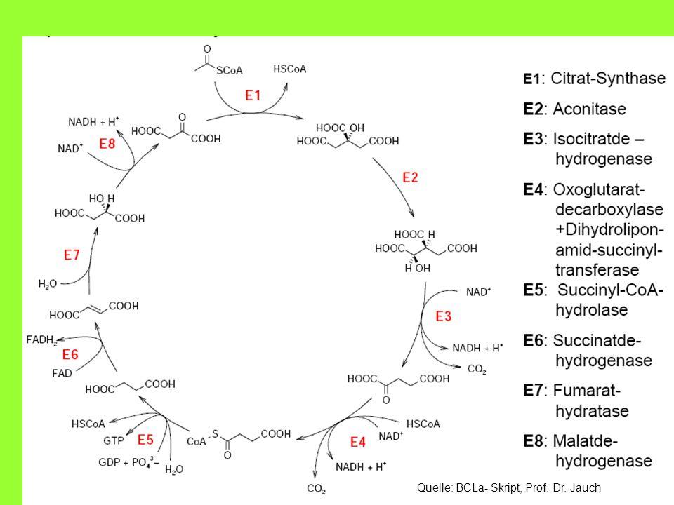 BCSLa: Der Zitronensäurezyklus16 4.