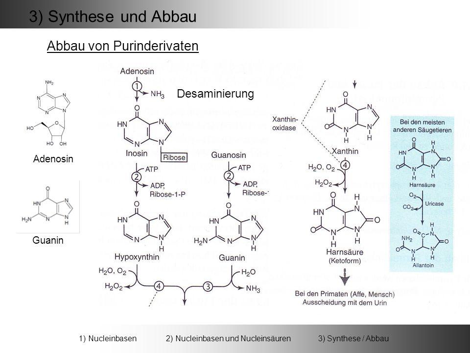 3) Synthese und Abbau Abbau von Purinderivaten Adenosin Desaminierung Guanin 1) Nucleinbasen 2) Nucleinbasen und Nucleinsäuren 3) Synthese / Abbau