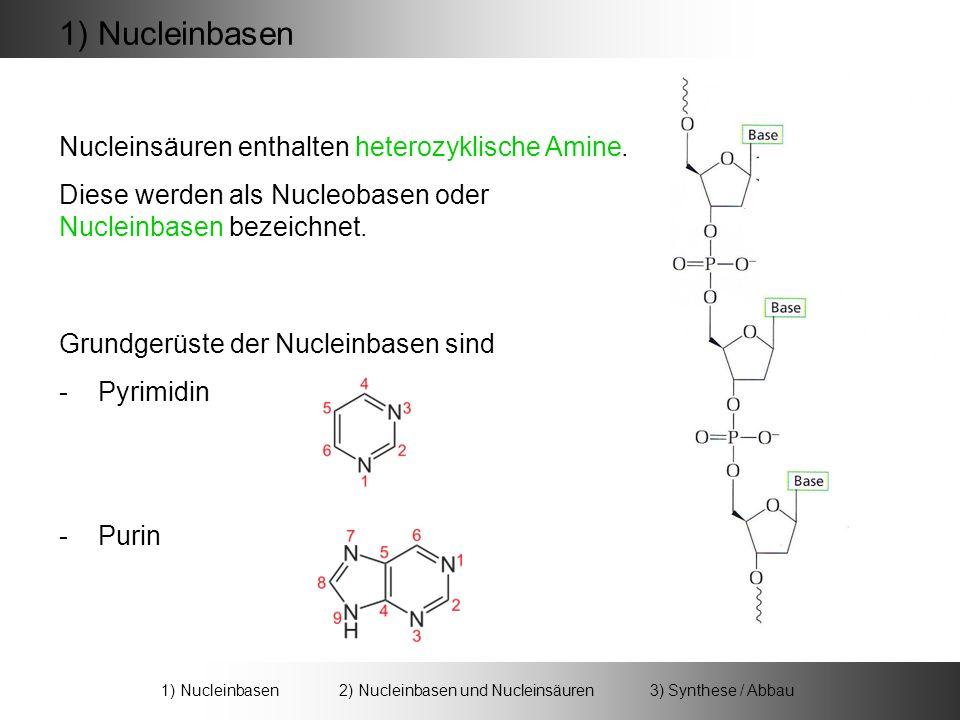 PyrimidinbasenPurinbasen 1) Nucleinbasen 1) Nucleinbasen 2) Nucleinbasen und Nucleinsäuren 3) Synthese / Abbau