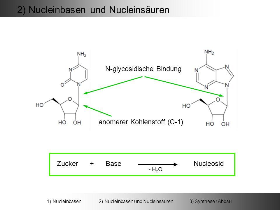 Zucker + Base Nucleosid - H 2 O N-glycosidische Bindung anomerer Kohlenstoff (C-1) 2) Nucleinbasen und Nucleinsäuren 1) Nucleinbasen 2) Nucleinbasen und Nucleinsäuren 3) Synthese / Abbau