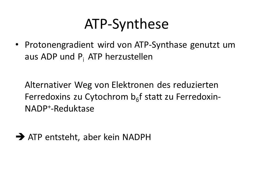 ATP-Synthese Protonengradient wird von ATP-Synthase genutzt um aus ADP und P i ATP herzustellen Alternativer Weg von Elektronen des reduzierten Ferred