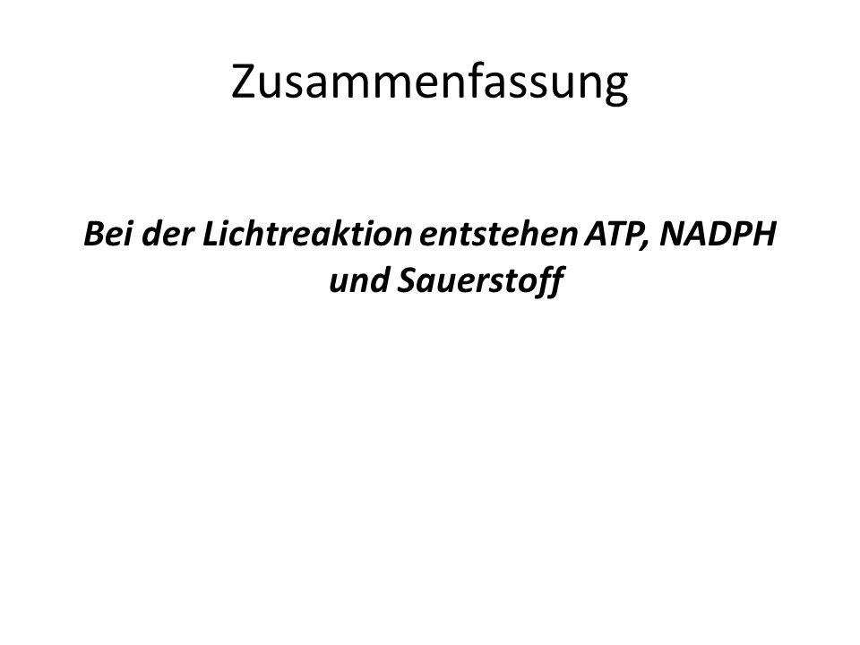 Zusammenfassung Bei der Lichtreaktion entstehen ATP, NADPH und Sauerstoff