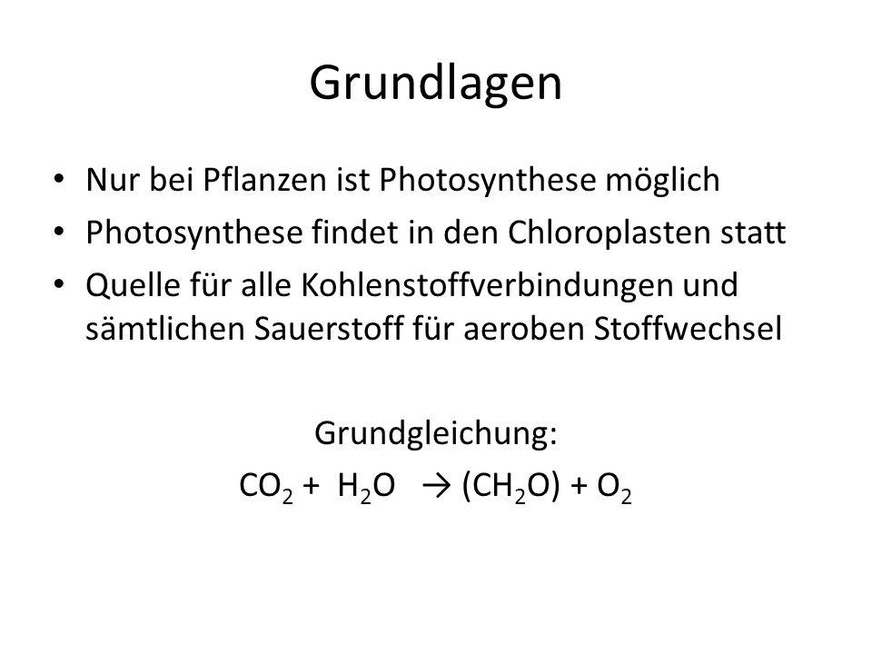 Grundlagen Nur bei Pflanzen ist Photosynthese möglich Photosynthese findet in den Chloroplasten statt Quelle für alle Kohlenstoffverbindungen und sämt