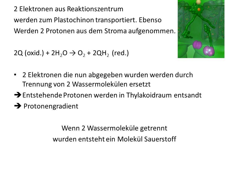 2 Elektronen aus Reaktionszentrum werden zum Plastochinon transportiert. Ebenso Werden 2 Protonen aus dem Stroma aufgenommen. 2Q (oxid.) + 2H 2 O O 2