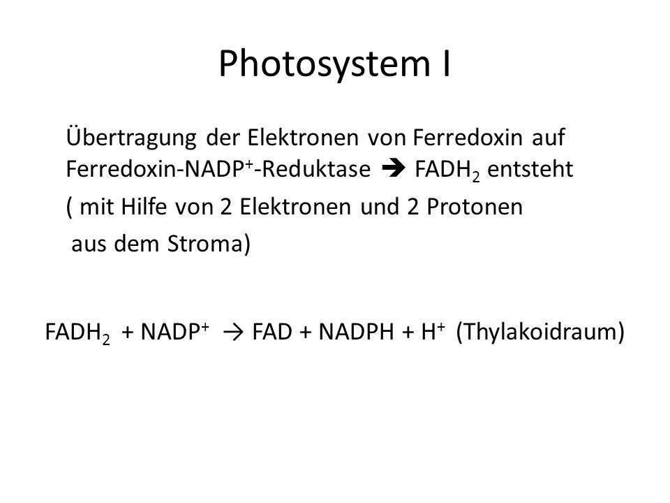 Photosystem I Übertragung der Elektronen von Ferredoxin auf Ferredoxin-NADP + -Reduktase FADH 2 entsteht ( mit Hilfe von 2 Elektronen und 2 Protonen a