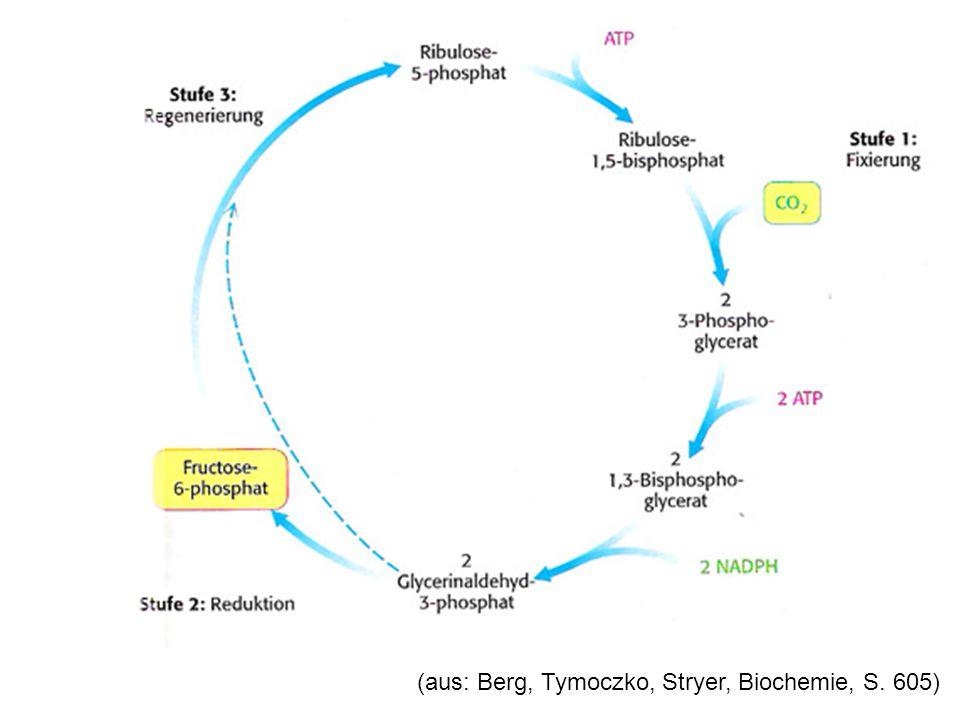 (RuBisCo = Ribulose-1,5-biphosphatcarboxylase RuDP = Ribulose-1,5-biphosphat PGS = Phosphoglycerinsäure)