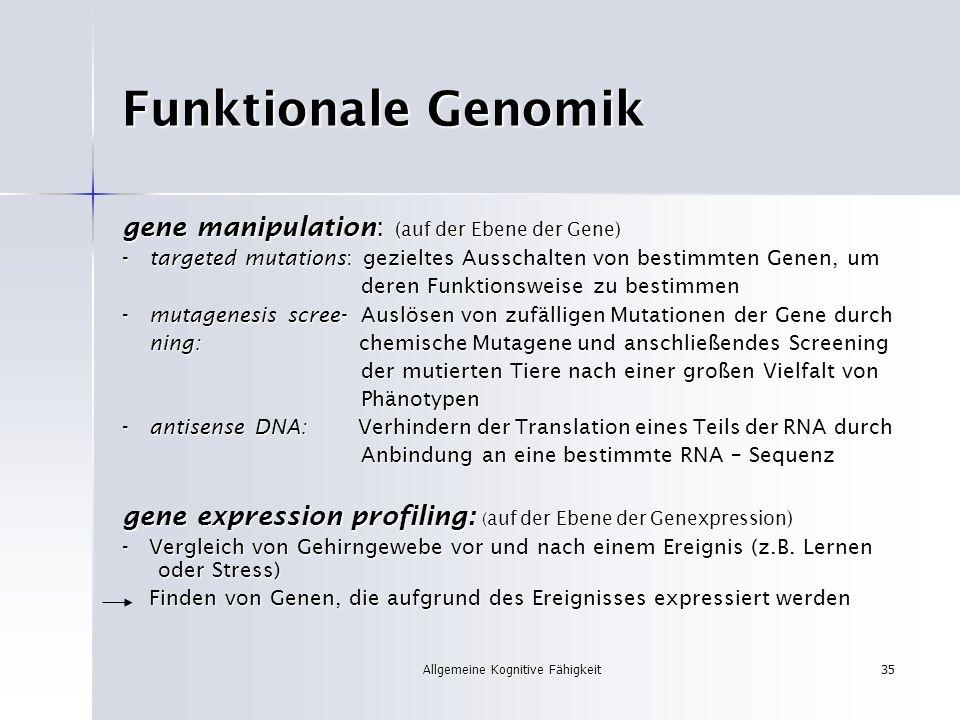 Allgemeine Kognitive Fähigkeit35 Funktionale Genomik gene manipulation: (auf der Ebene der Gene) - targeted mutations: gezieltes Ausschalten von besti