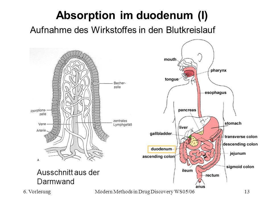 6. VorlesungModern Methods in Drug Discovery WS05/0613 Absorption im duodenum (I) Aufnahme des Wirkstoffes in den Blutkreislauf Ausschnitt aus der Dar
