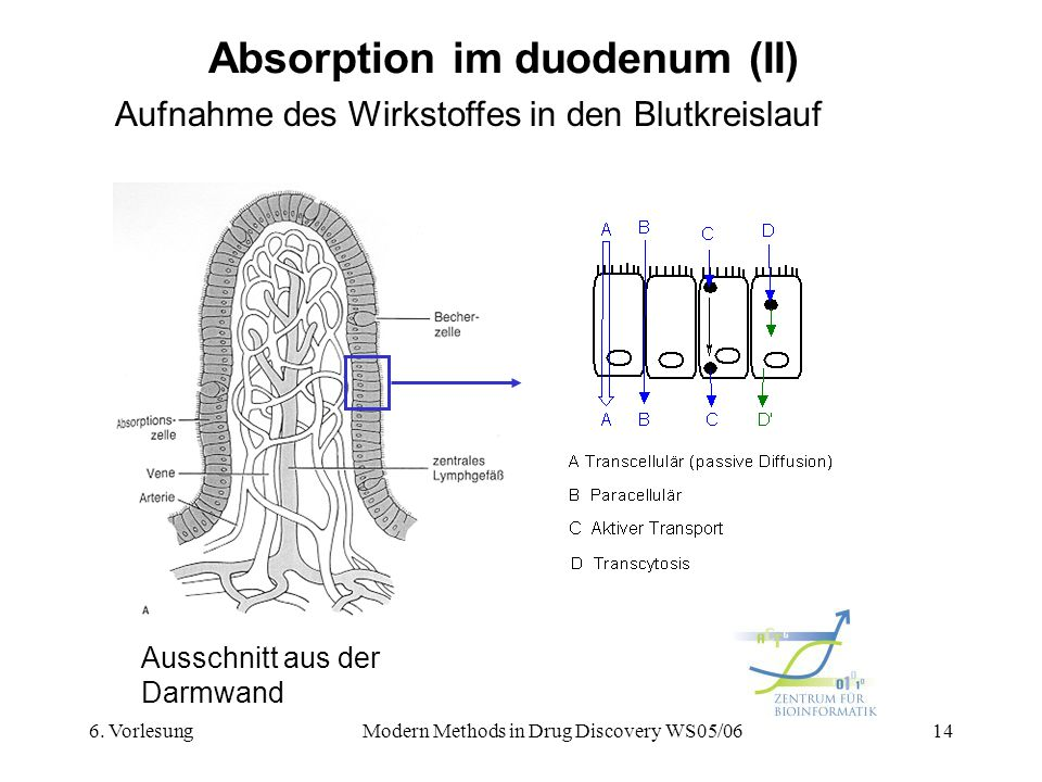 6. VorlesungModern Methods in Drug Discovery WS05/0614 Absorption im duodenum (II) Aufnahme des Wirkstoffes in den Blutkreislauf Ausschnitt aus der Da