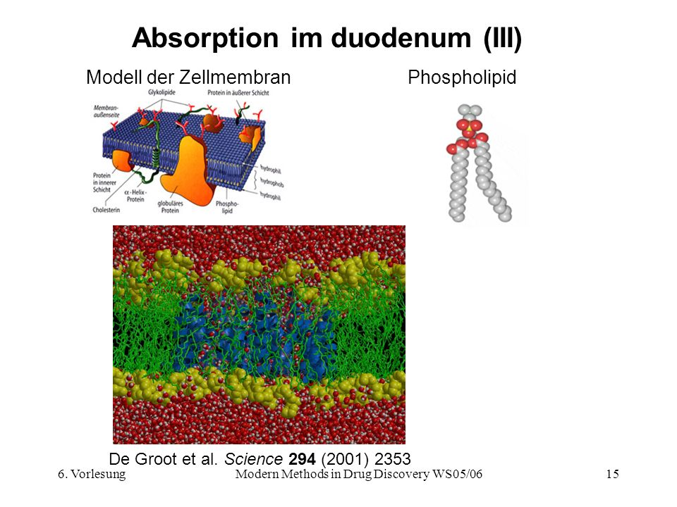 6. VorlesungModern Methods in Drug Discovery WS05/0615 Absorption im duodenum (III) Modell der ZellmembranPhospholipid De Groot et al. Science 294 (20